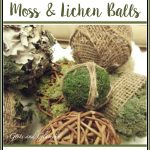 Lichen and Moss Covered Balls
