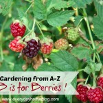 Gardening from A-Z {Giveaway!}