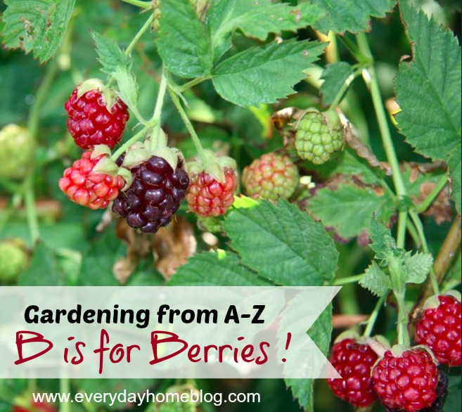 Gardening A-Z at The Everyday Home