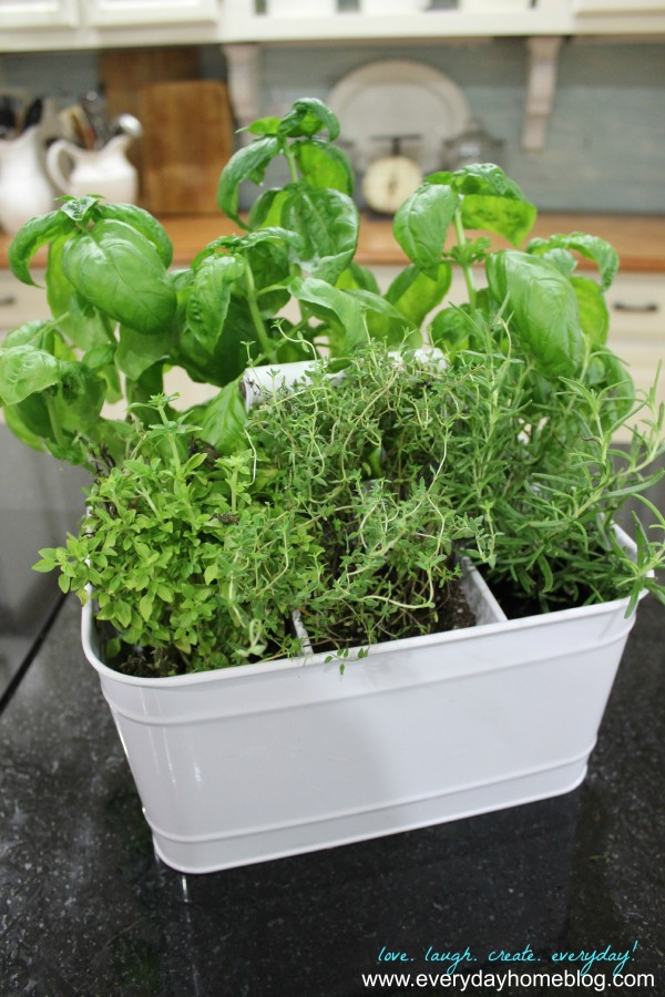 Utensil Caddy Herb Garden at The Everyday Home