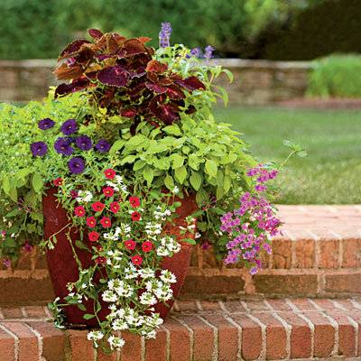 Container gardening the everyday home - Better homes and gardens container gardening ...