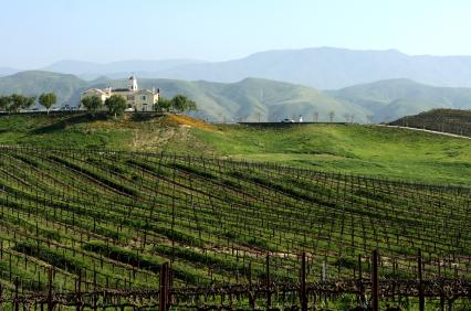 Vineyard in winelands of California