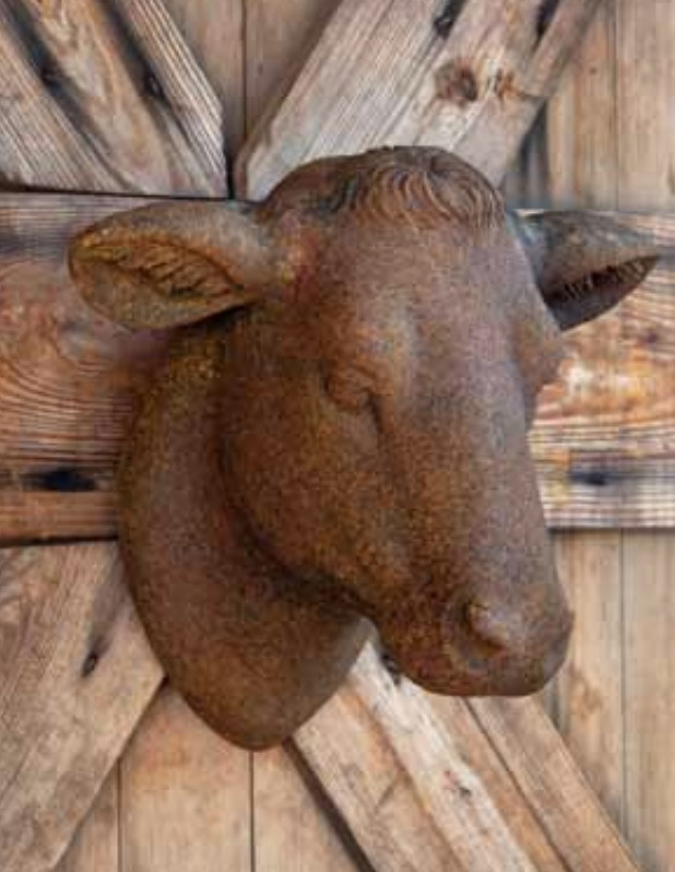 Yearling Heifer Cow Head at The Everyday Home