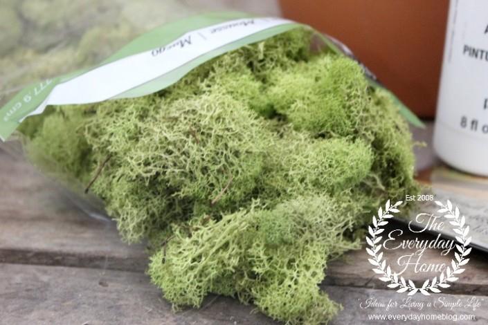 Moss-Pot-Moss