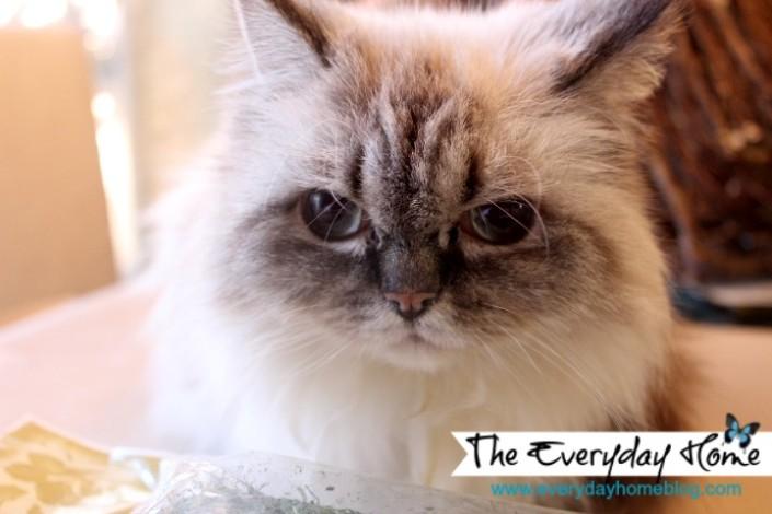 moss-pillow-craft-cat