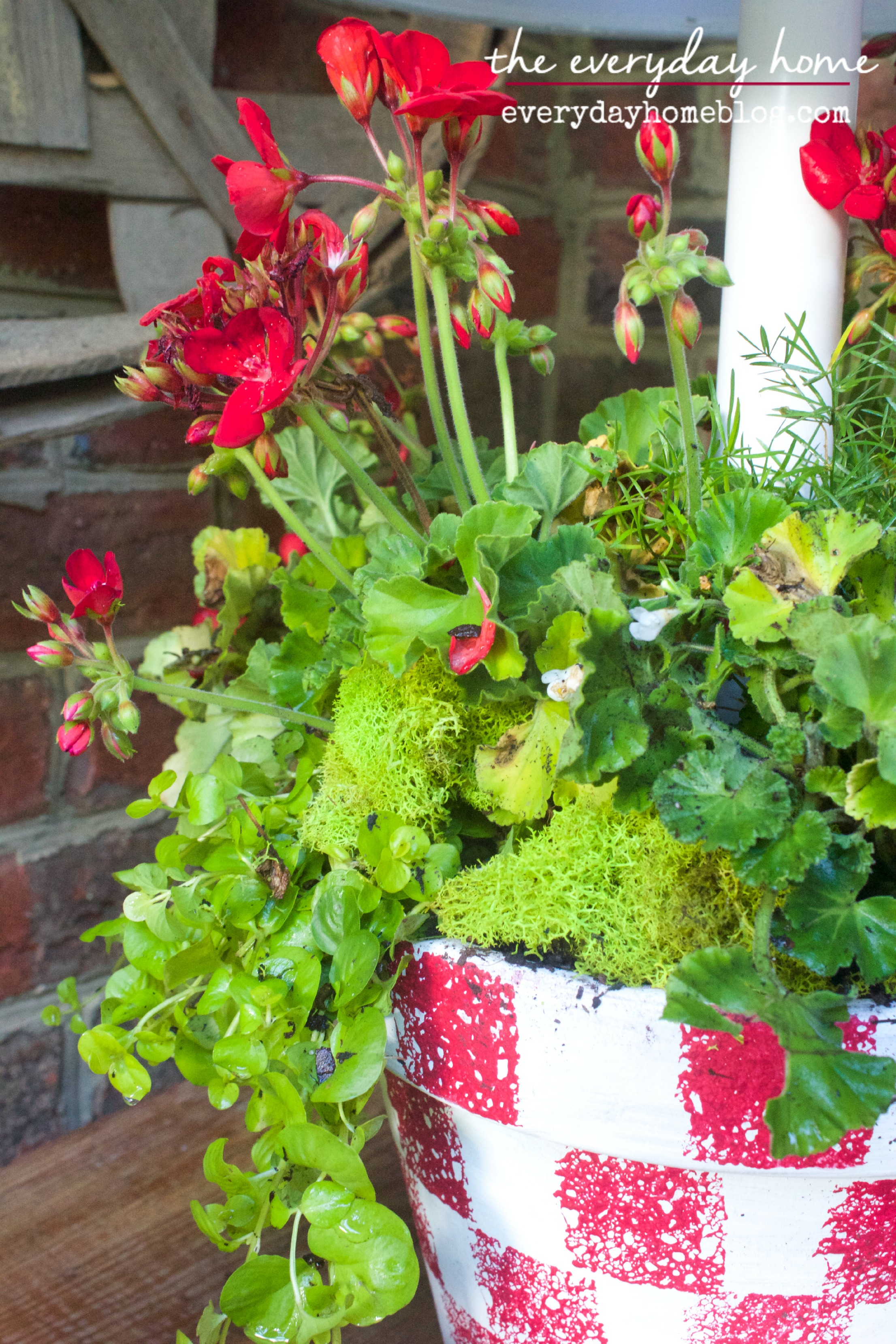 Checkered Painted Pot by The Everyday Home  www.everydayhomeblog.com