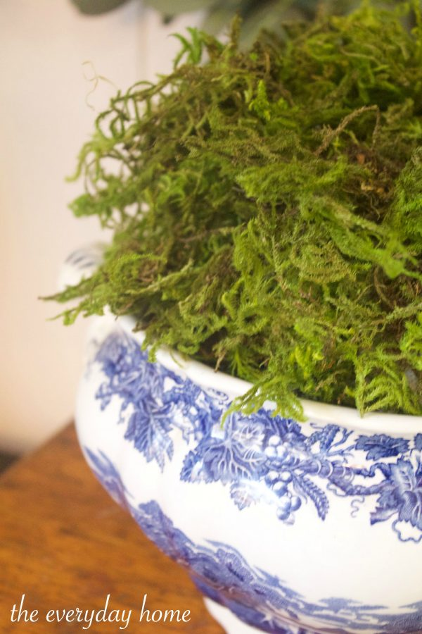 Moss in Blue Bowl | The Everyday Home | www.everydayhomeblog.com