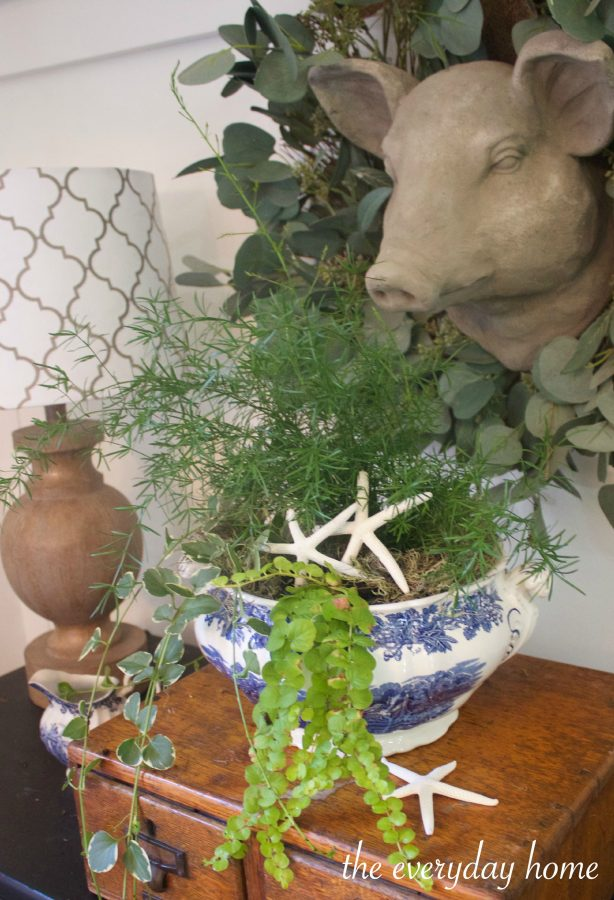 Plants and Shells in Blue Bowl | The Everyday Home | www.everydayhomeblog.com