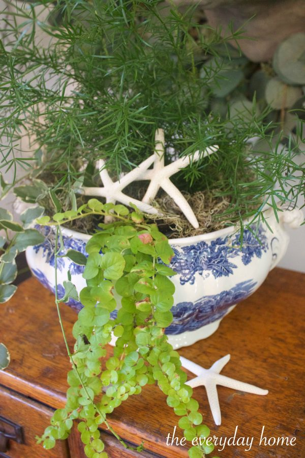 Plants and Shells in English Bowl | The Everyday Home | www.everydayhomeblog.com