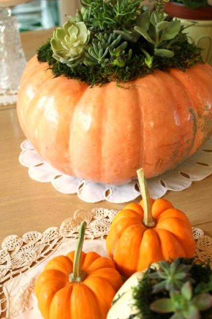 succulent pumpkins2