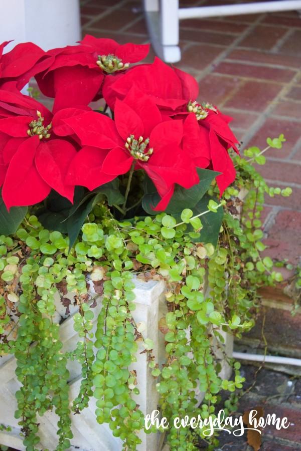 Poinsettia in Pots | 2015 Christmas Home Tour | The Everyday Home | www.everydayhomeblog.com
