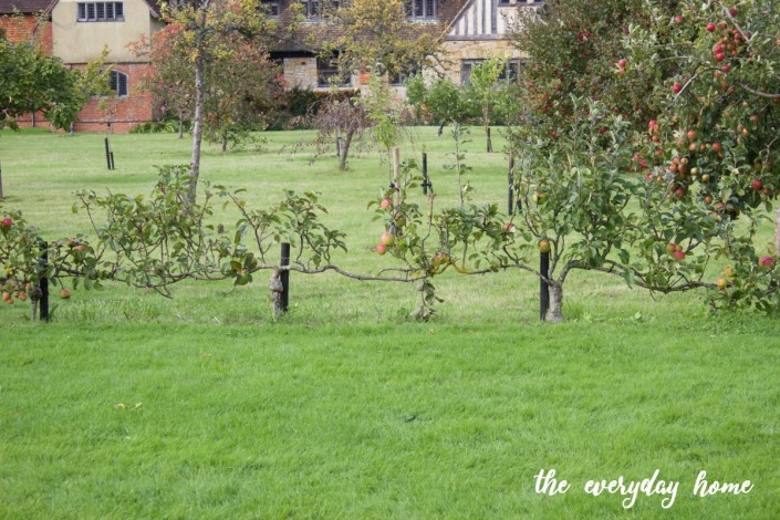 Hever Castle Apple Vines | The Everyday Home