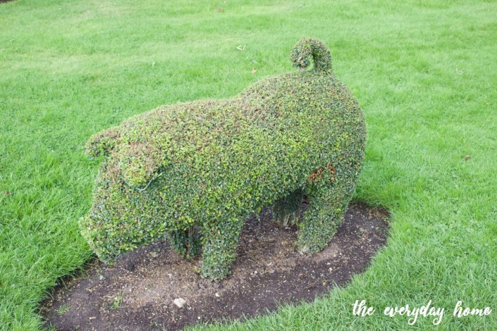 Hever Castle Pig Topiary | The Everyday Home