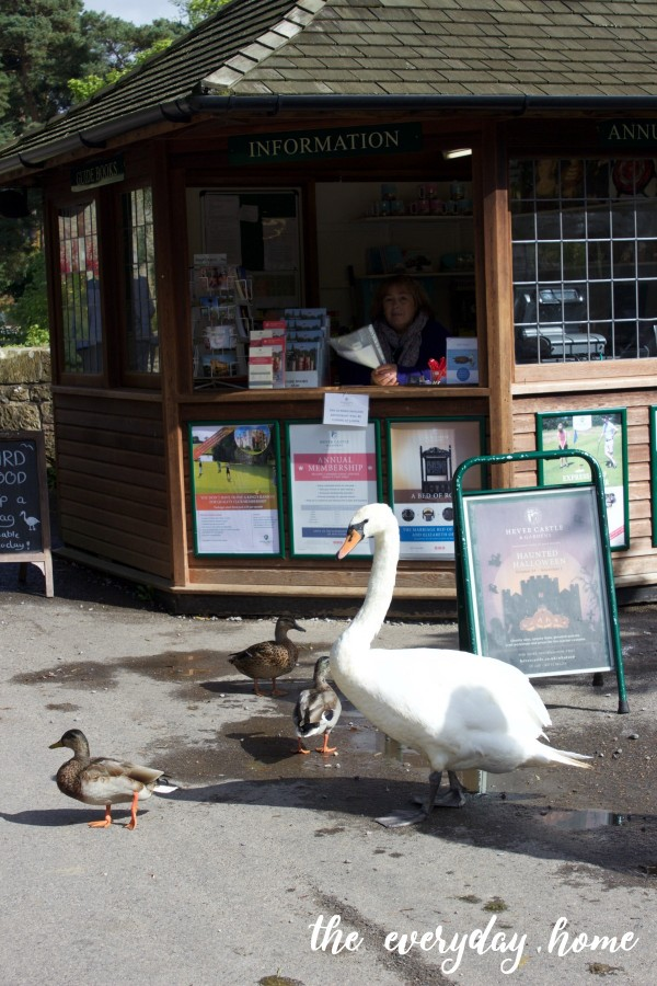 Hever Castle Swans | The Everyday Home