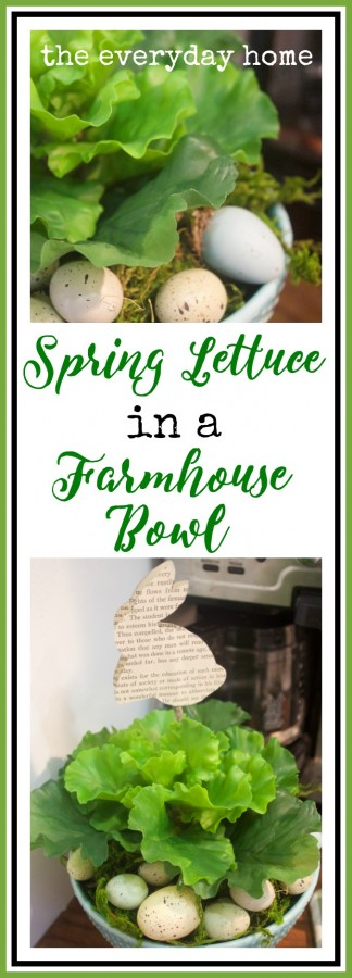 Spring Lettuce | The Everyday Home
