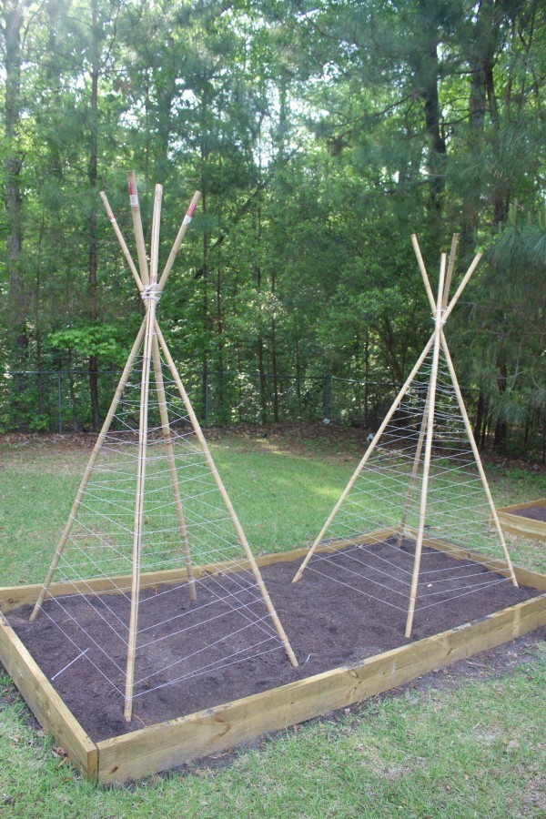 How to Build a Bean Teepee Frame - The Everyday Home