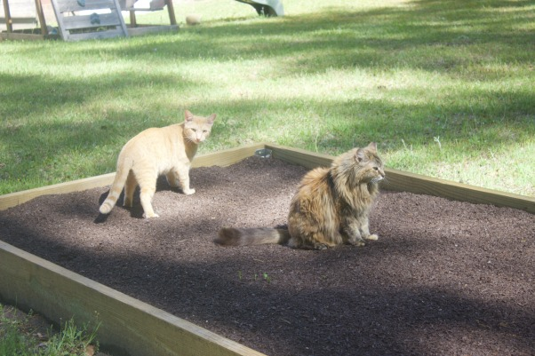 Garden Cats   The Everyday Home