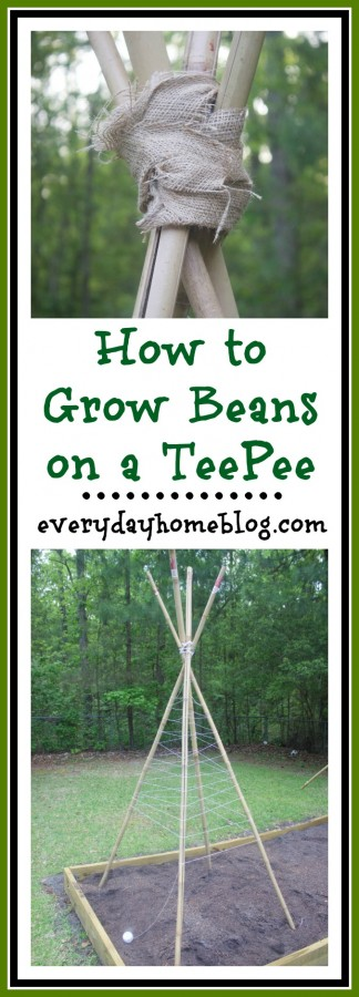 How to Grow Beans on a Teepee | The Everyday Home