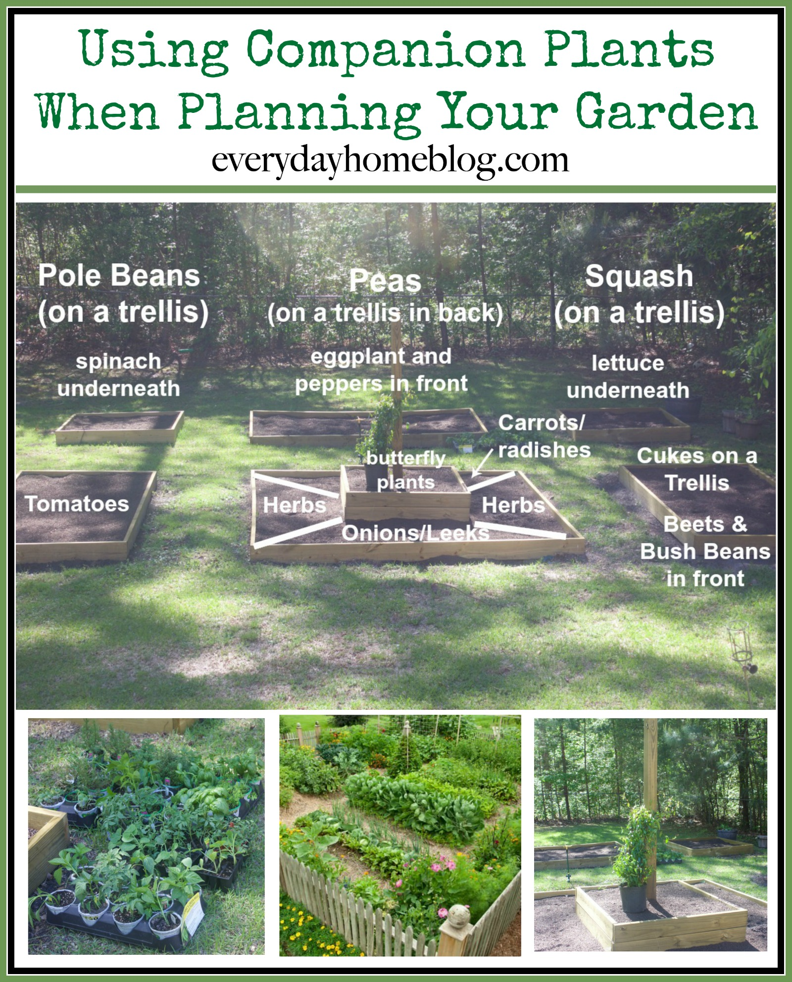 Using Companion Plants When Planning Your Garden   The Everyday Home   www.everydayhomeblog.com