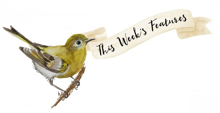 Bird Ribbon Week Features