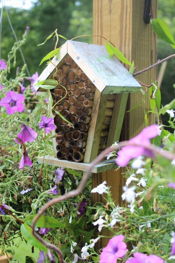 How to Create Your Own Bee Garden | The Everyday Home | www.everydayhomeblog.com