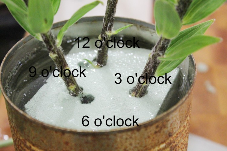 Clock position floral arranging