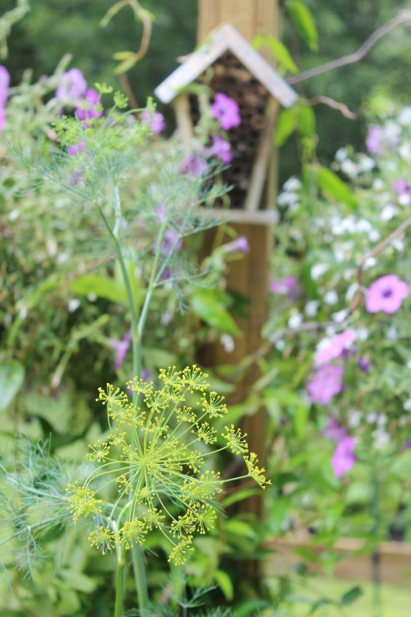 Dill in the Bee Garden | The Everyday Home | www.everydayhomeblog.com