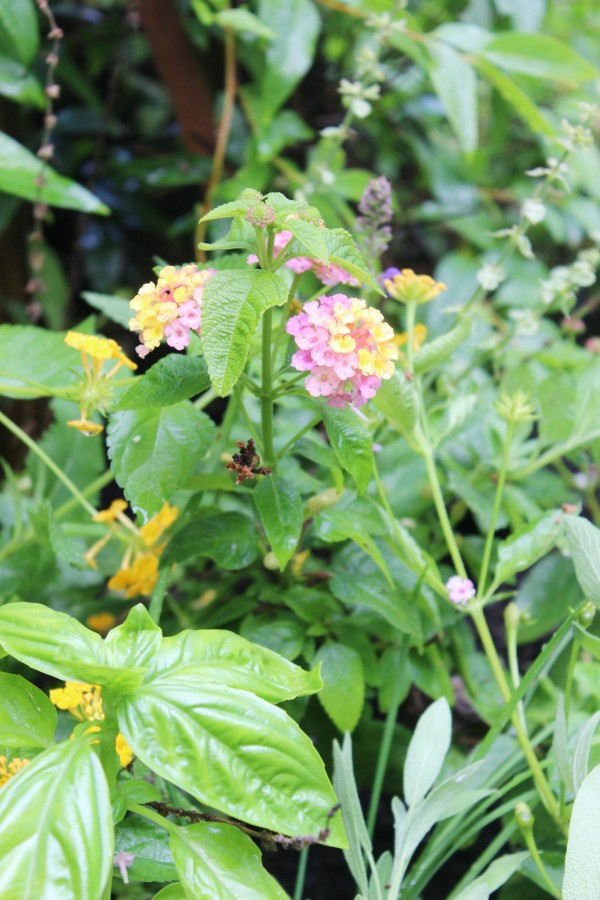 Flowers in the Bee Garden | The Everyday Home