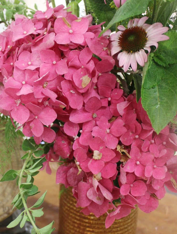 Pink Hydrangea | The Everyday Home