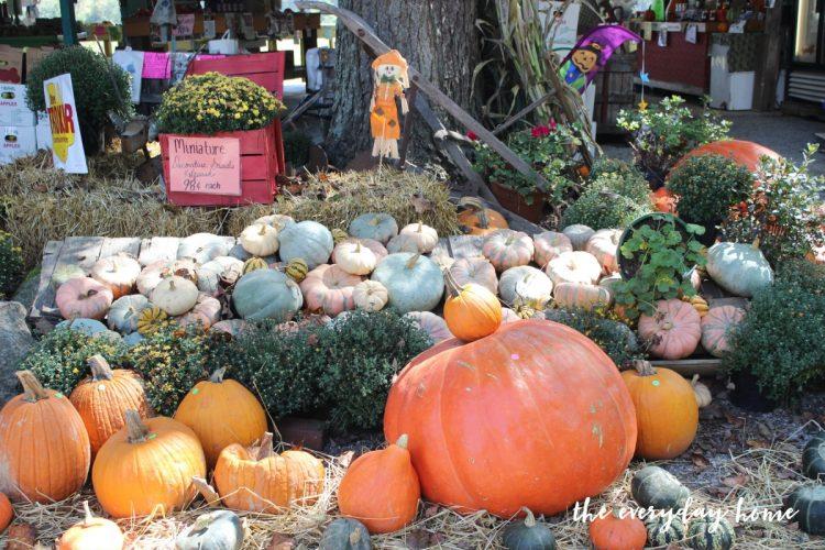 pumpkins | The Everyday Home | www.everydayhomeblog.com