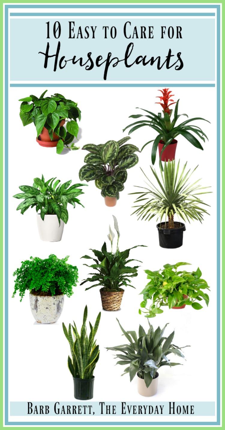 10 Easy to Care for Houseplants | The Everyday Home | www.everydayhomeblog.com