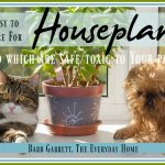 10 Easy to Maintain Houseplants