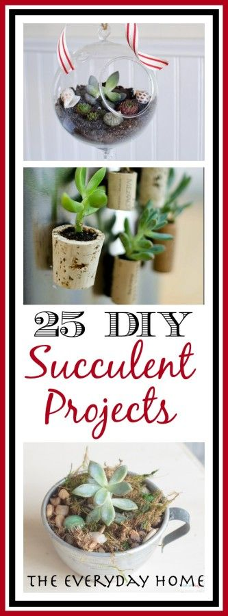25 Ways to Succulent Projects || The Everyday Home || www.everydayhomeblog.com