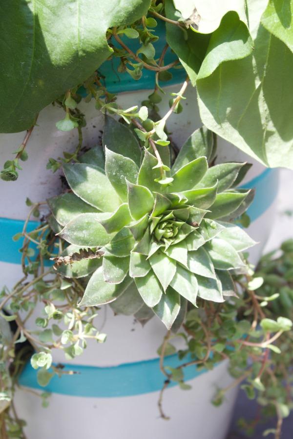 Easy Succulent Garden Container || The Everyday Home || www.everydayhomeblog.com