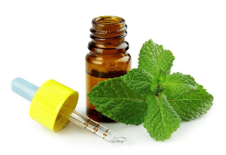 Peppermint: One of the 3 Essential Oils Every Home Should Have | The Everyday Home