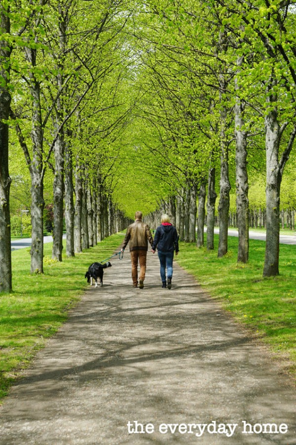 Why You Should Unplug and Take a Walk | The Everyday Home