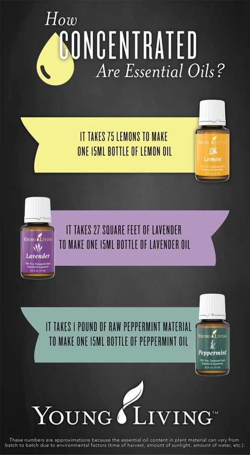 Essential Oil Concentrations | The Everyday Home